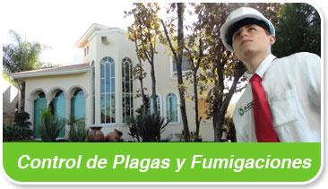 servicios control de plagas y fumigaciones